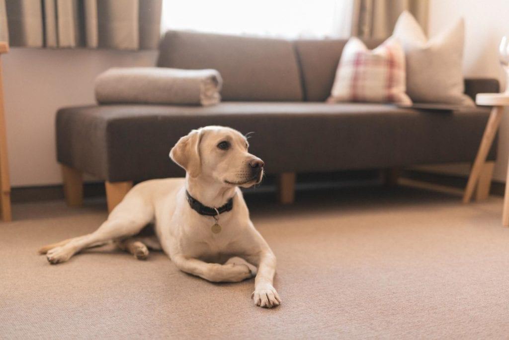 Urlaub mit Hund im Hotel in Heiligenblut