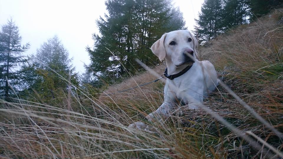 Grossglockner Wandern mit Hund